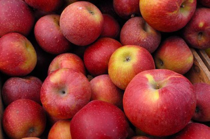 рецепт приготовления браги для самогона из яблок