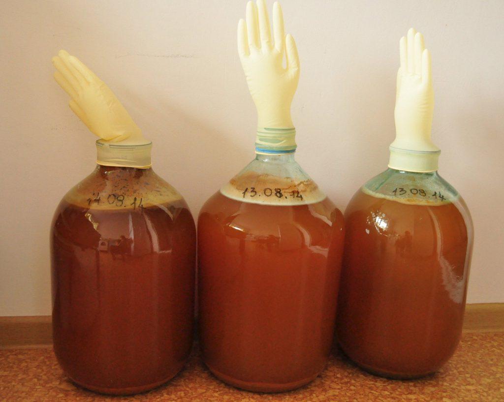Рецепты яблочное вино в домашних условиях простой рецепт
