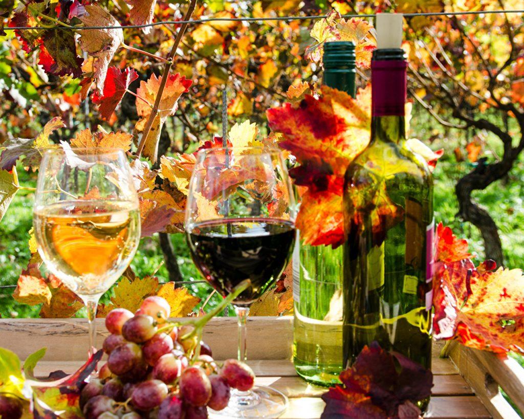 какое вино лучше